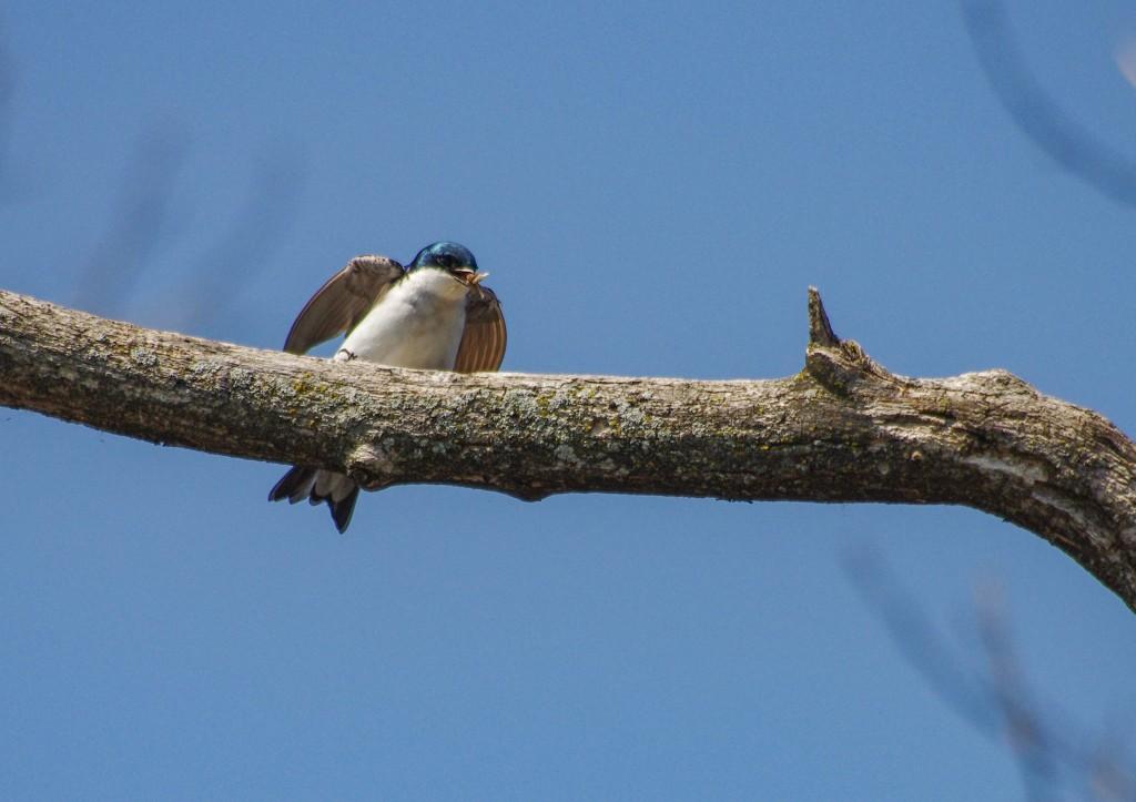 fid tree swall 16